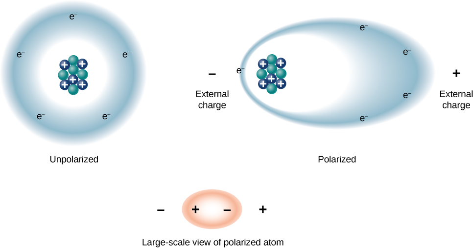 The figures show a large scale view of an atom. Figure a shows an unpolarized atom, with protons and neutrons in the center and a circular electron cloud surrounding the nucleus. Figure b shows a polarized atom and positive and negative external charges. The atom is oblong in shape with the electron cloud being pulled towards the positive external charge, and the nucleus being pulled towards the negative external charge. Figure c shows another oblong polarized atom.