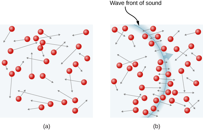 In part a of the figure, circles represent molecules distributed in a gas. An arrow at each circle represents the molecule's velocity vector. The locations of the molecules and their velocity magnitudes and directions are all randomly distributed. In part b of the figure, an arc represents the wave front of a sound wave in the gas. The velocities of molecules near the arc are oriented roughly perpendicular to the arc, and therefore parallel to the propagation direction of the wave.