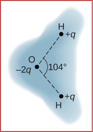 A schematic representation of the outer electron cloud of a neutral water molecule is shown. Three atoms are at the vertices of a triangle. The hydrogen atom has positive q charge and the oxygen atom has minus two q charge, and the angle between the line joining each hydrogen atom with the oxygen atom is one hundred and four degrees. The cloud density is shown as being greater at the oxygen atom.