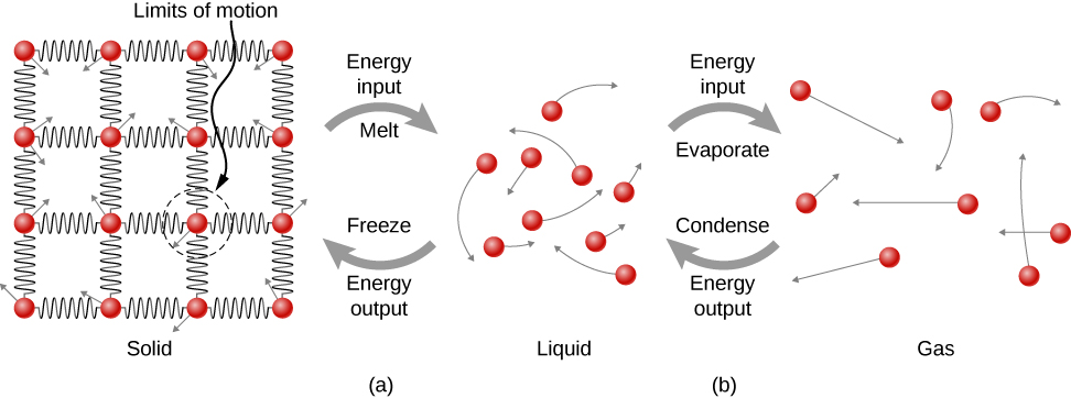 Figure a shows conversion from solid to liquid. In the solid substance, molecules are seen as small circles arranged in a grid. They are connected to one another through springs, forming a lattice structure. Each molecule has a small arrow originating from it. These arrows point in different directions. The length of the arrow forms the radius of a circle labeled limits of motion. In the liquid, the molecules are further apart from each other than in the solid. Arrows from the molecules indicate that they move in any direction. An arrow from the solid to the liquid is labeled energy input, melt. An arrow from the liquid to the solid is labeled energy output, freeze. Figure b shows the liquid and gas, where the molecules are even further apart than the liquid. In the gas, too, they move in any direction. An arrow from the liquid to the gas is labeled energy input evaporate. An arrow from gas to liquid is labeled energy output, condense.