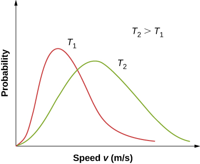 Two distributions of probability versus velocity v in meters per second at two different temperatures, T one and T two, are plotted on the same graph. Temperature two is greater than Temperature one. The distribution for T two has a broader peak with a maximum at a higher velocity and lower probability than the distribution for Temperature one.