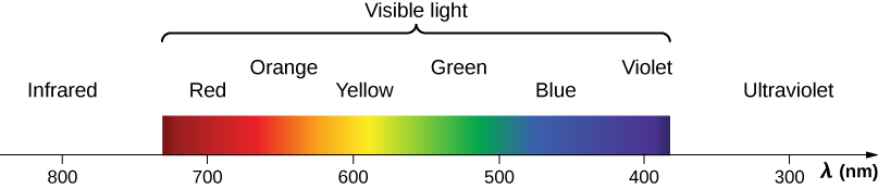 Figure shows wavelength in nanometers on an axis. The wavelength of 800 nm is labeled infrared. The visible light spectrum is from red at 700 nm to violet at 400 nm. The colors of the rainbow are seen in between. Ultraviolet is at 300 nm.