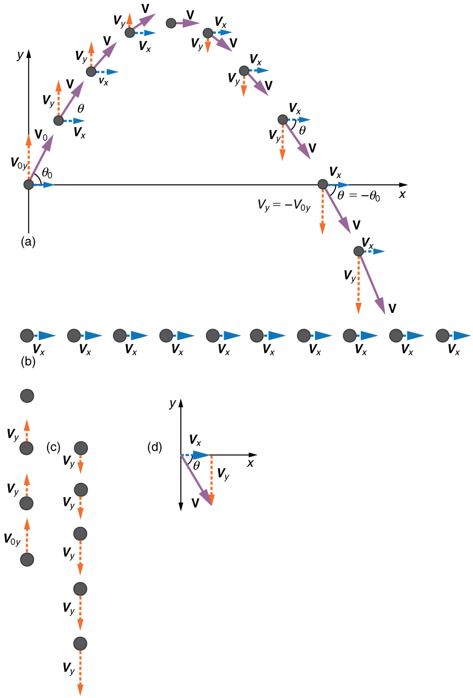 In part a the figure shows projectile motion of a ball with initial velocity of v zero at an angle of theta zero with the horizontal x axis. The horizontal component v x and the vertical component v y at various positions of ball in the projectile path is shown. In part b only the horizontal velocity component v sub x is shown whose magnitude is constant at various positions in the path. In part c only vertical velocity component v sub y is shown. The vertical velocity component v sub y is upwards till it reaches the maximum point and then its direction changes to downwards. In part d resultant v of horizontal velocity component v sub x and downward vertical velocity component v sub y is found which makes an angle theta with the horizontal x axis. The direction of resultant velocity v is towards south east.