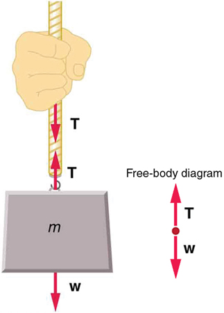 An object of mass m is attached to a rope and a person is holding the rope. A weight vector W points downward starting from the lower point of the mass. A tension vector T is shown by an arrow pointing upward initiating from the hook where the mass and rope are joined, and a third vector, also T, is shown by an arrow pointing downward initiating from the hand of the person.