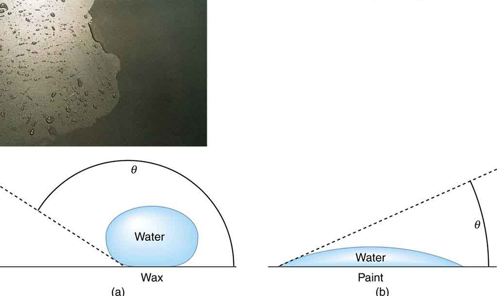 Water is seen to make beads on the waxed surface of car paint and it remains flat on the surface without wax. The beads are due to the greater force of attraction between the water molecules than between the water molecules and the surface. On the surface without wax the force of attraction between the water molecules and paint is greater.