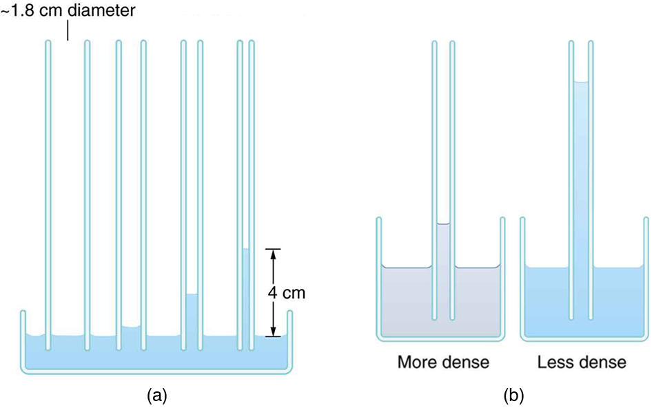 The left image shows liquid in a container with four tubes of progressively smaller diameter inserted into the liquid. The liquid rises higher in the smaller-diameter tubes. The right image shows two containers, one holding a dense liquid and the other holding a less-dense liquid. Identical tubes are inserted into each liquid. The less-dense liquid rises higher in its tube than the more-dense liquid does in its tube.