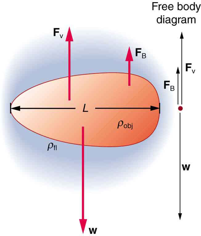 The figure shows the forces acting on an oval shaped object falling through a viscous fluid. An enlarged view of the object is shown toward the left to analyze the forces in detail. The weight of the object w acts vertically downward. The viscous drag F v and buoyant force F b acts vertically upward. The length of the object is given by L. The density of the object is given by rho obj and density of the fluid by rho fl.