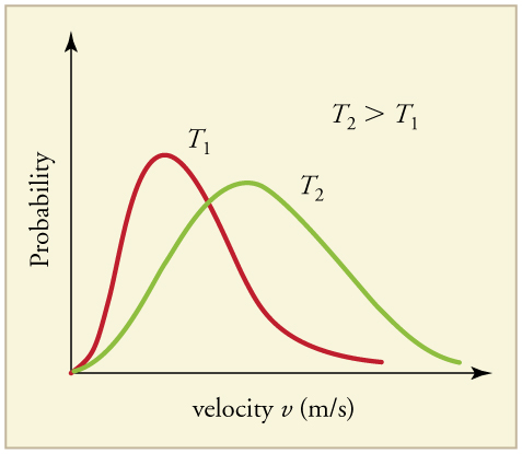 Two distributions of probability versus velocity at two different temperatures plotted on the same graph. Temperature two is greater than Temperature one. The distribution for Temperature two has a peak with a lower probability, but a higher velocity than the distribution for Temperature one. The T sub two graph has a more normal distribution and is broader while the T sub one graph is more narrow and has a tail extending to the right.