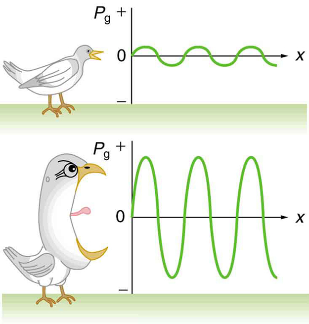 The image shows two graphs, with a bird positioned to the left of each one. The first graph represents a low frequency sound of a bird. The pressure variation shows small amplitude maxima and minima, represented by a sine curve of gauge pressure versus position with a small amplitude. The second graph represents a high frequency sound of a screaming bird. The pressure variation shows large amplitude maxima and minima, represented by a sine curve of gauge pressure versus position with a large amplitude.
