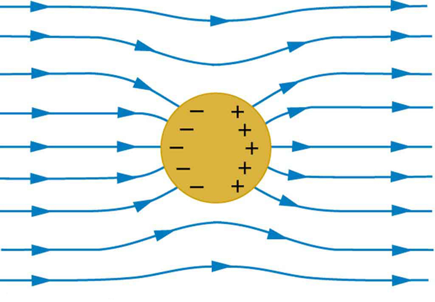 A spherical conductor is placed in the external electric field. The field lines are shown running from left to right. The field lines enter and leave the conductor at right angles. Negative charges accumulate on the left surface of the conductor and positive charges accumulate on the right surface of the conductor.