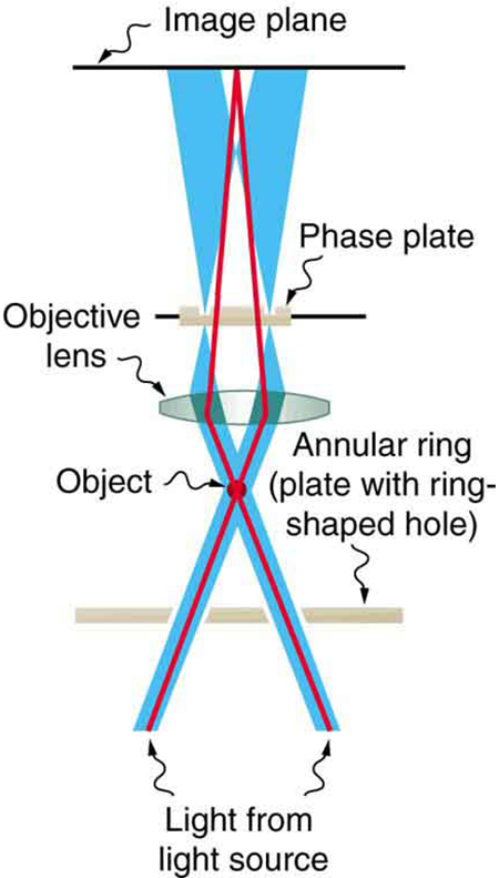 The schematic shows two beams of light going up from the bottom of the image and crossing at a point labeled object. After passing through the object, the beams diverge and then are focused by a convex lens. The light passes through a plate called the phase plate, and the beams then focus on the image plane. The background light diverges after passing through the phase plate so that it spreads away from the primary light beam on the image plane.