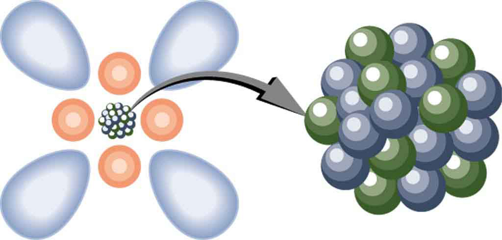 A model of an atom is shown. Atom is shown as a clump of small spherical balls at the center, representing the nucleus, surrounded by spherical and dumbbell-shaped electron clouds. A magnified view of the nucleus is shown as a bunch of small spherical balls.