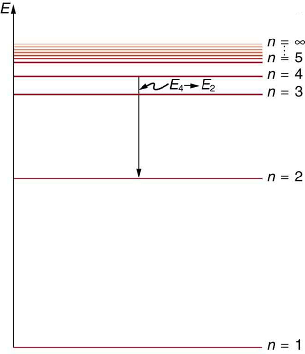 The energy level diagram is shown. A number of horizontal lines are shown. The lines are labeled from bottom to top as n is equal to one, n is equal to two and so on up to n equals infinity; the energy levels increase from bottom to top. The distance between the lines decreases from the bottom line to the top line. A vertical arrow shows an electron transitioning from n equals four to n equals two.