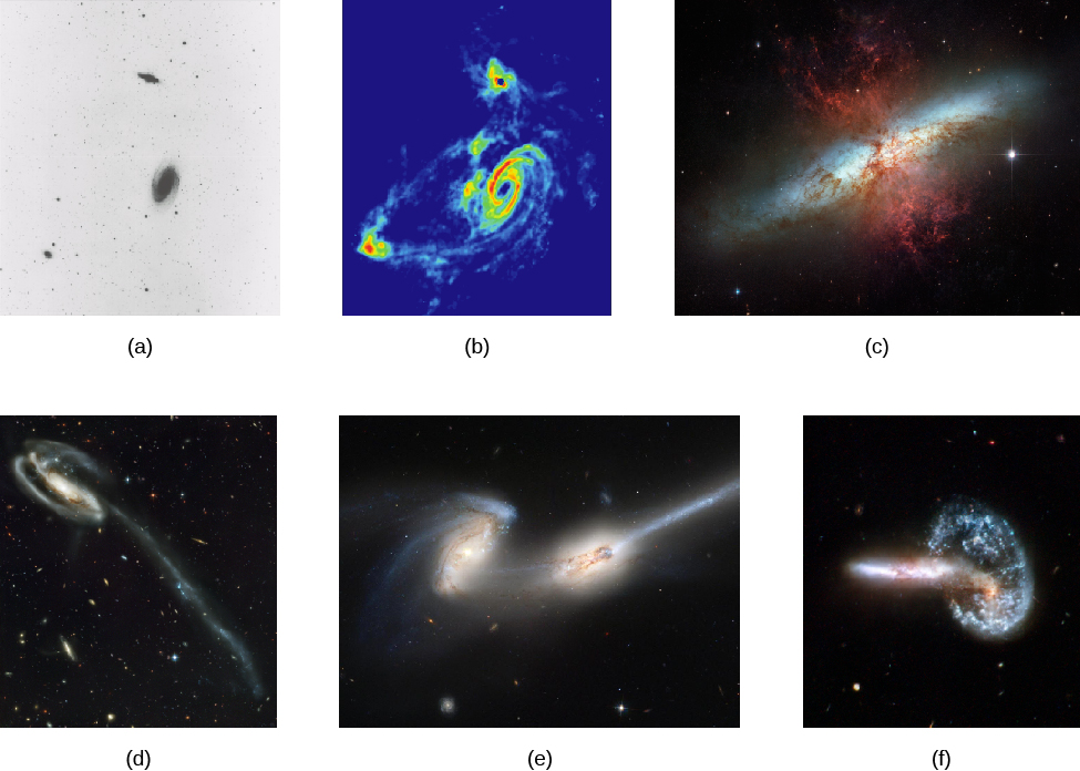"Gallery of Interacting Galaxies. Panels ""a"" and ""b"" show M82 (smaller galaxy at top) and M83 (spiral) seen in a black-and-white visible light image (a) and in radio waves given off by cold hydrogen gas (b). The hydrogen image shows the two galaxies wrapped in a common shroud of gas that is being stretched by the gravity of the two galaxies. Panel ""c"" presents a close-up view by HST showing some of the effects of this interaction on galaxy M82, including gas streaming outward (red tendrils), powered by supernovae. In panel ""d"" is galaxy UGC 10214 that has been disrupted by the passage of a smaller galaxy. The interloper's gravity pulled out the long tidal tail, which is about 280,000 light years long, and triggered bursts of star formation seen as blue clumps along the tail. Galaxies NGC 4676 A and B in panel ""e"" are nicknamed ""The Mice."" In this HST image, you can see the long narrow tails of stars pulled away from the galaxies by the interactions of the two spirals. Panel ""f"" shows Arp 148, a pair of galaxies that are caught in the act of merging to become one new galaxy. The two have already passed through each other once, causing a shockwave that reformed one into a bright blue ring of star formation."