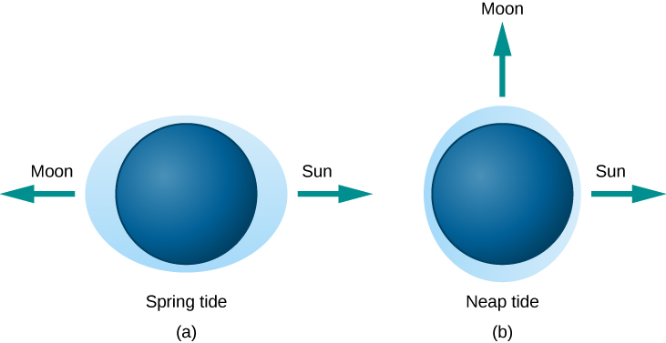 "Tides Caused by Different Alignments of the Sun and Moon. In this illustration, the Earth is drawn as a dark blue disk within a light blue ellipse representing the oceans. In panel (a), at left and labeled ""Spring tide"", the perimeter of the ellipse furthest from the Earth's surface at the points ""below"" the Sun and Moon. The direction to the Moon is indicated with an arrow pointing left, and the Sun with an arrow pointing to the right. In panel (b), at right and labeled ""Neap tide"", the perimeter of the ellipse comes closest to the Earth's surface at the point ""below"" the Sun indicated with an arrow pointing right. The ellipse is furthest from the surface at the point below the Moon, indicated with an arrow pointing upward."