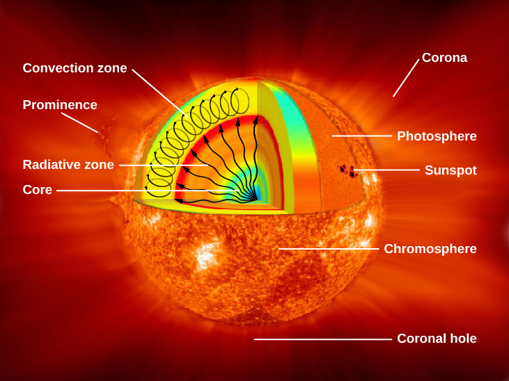 Interior Structure of the Sun. In this cutaway illustration of the Sun, a triangular wedge shaped portion has been removed from the upper half to expose the interior, with surface features shown in the lower half of the diagram. Interior features are labeled on the left hand side of the figure. In the interior, the core is labeled and drawn in blue. Next, the radiative zone is labeled and drawn as a gradient of color starting with yellow just outside the core, to orange and finally red marking the upper boundary. Several wavy arrows are drawn from the center of the core out to the red boundary of the radiative zone, representing the energy leaving the core and moving through the radiative zone. The convection zone is drawn as a thick yellow layer above the radiative zone. Oval arrows are drawn within the convection zone to indicate the vertical motion of the gas. Features are labeled on the left and right hand side of the figure: convection zone, prominence, radiative zone, core, corona, photosphere, sunspot, chromosphere, and coronal hole.