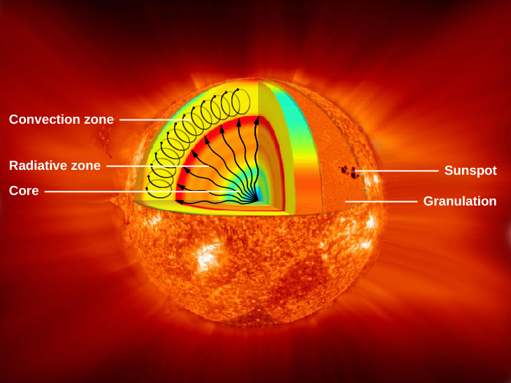 Interior Structure of the Sun. In this cutaway illustration of the Sun, a triangular wedge shaped portion has been removed from the upper half to expose the interior, with surface features shown in the lower half of the diagram. Interior features are labeled on the left hand side of the figure. In the interior, the core is labeled and drawn in blue. Next, the radiative zone is labeled and drawn as a gradient of color starting with yellow just outside the core, to orange and finally red marking the upper boundary. Several wavy arrows are drawn from the center of the core out to the red boundary of the radiative zone, representing the energy leaving the core and moving through the radiative zone. The convection zone is drawn as a thick yellow layer above the radiative zone. Oval arrows are drawn within the convection zone to indicate the vertical motion of the gas. Surface features are labeled on the right had side of the figure. Two surface features are labeled, granulation and a sunspot.