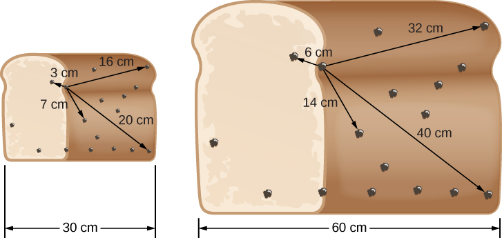 "Expanding Raisin Bread. In this illustration, the loaf of raisin bread at left is 30 cm wide. Arrows are drawn from a ""reference"" raisin located to the left of center to four other raisins within the loaf, with distances indicated. Clockwise from upper left: 3 cm, 16 cm, 25 cm and 7 cm from the reference. At right, the loaf has expanded to 60 cm wide. The distances from the ""reference"" raisin have increased accordingly. Clockwise from upper left: 6 cm, 32 cm, 50 cm and 14 cm."